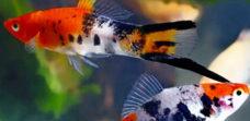 Мирная рыба