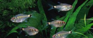 рыбки плавают