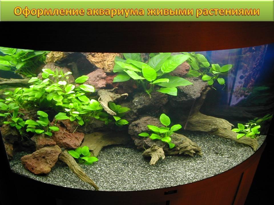 Грунт для аквариума с живыми растениями своими руками 3